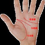 手相 生命線、知能線、感情線