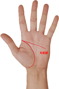 手相 知能線 傾きが小さい